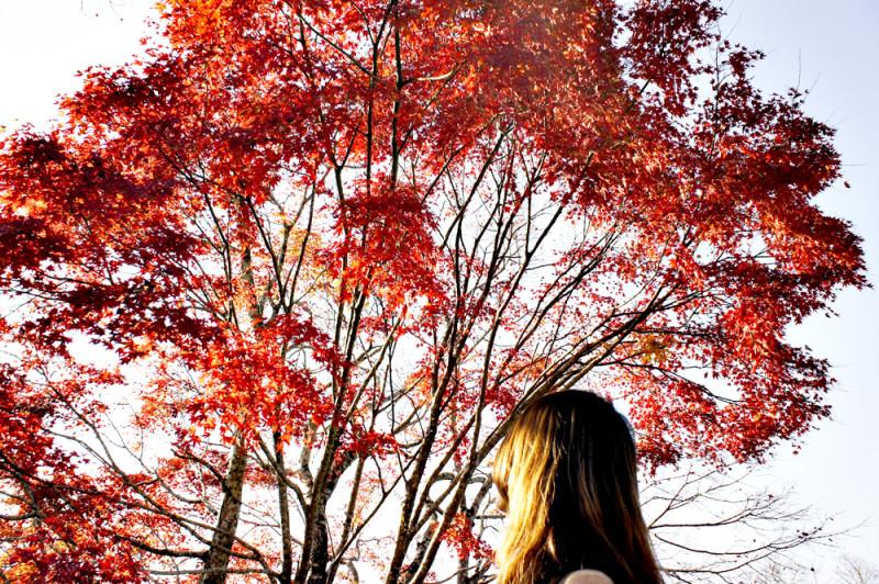 岡城址の紅葉