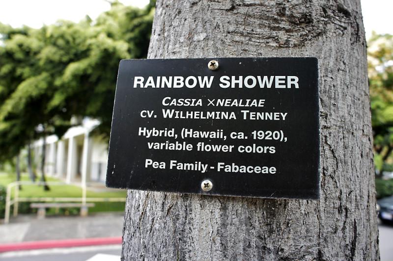 ハワイ大学のレインボーシャワーの木