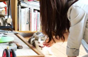 看板ネコ楓ちゃんがいる南阿蘇の「カフェ山猫軒」